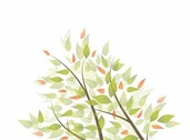 Green Leaves Vector Graphic Background