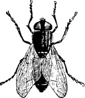 Fly Bug Insect