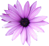 Purple Flower PSD