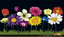 Several flowers on grass background