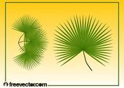 Palm Leaves Graphics