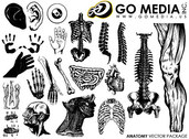Go Media Produced Vector Graphic - The Human Body Parts And Organs