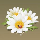 Beautiful flowers white background