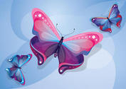 Butterfly Vector Pack