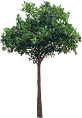 Tree (high-res) PSD