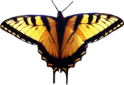 Yellow Butterfly PSD