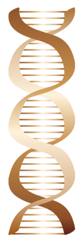 Bronze DNA icon