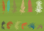 Isolated Feather Vectors