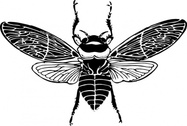 Bee Top View