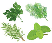 Chinese Herbal Foliage 04 - Vector Herbs Leaves Medicine