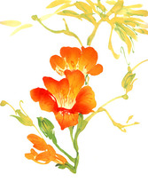 Watercolor Painting Of Flowers Results