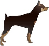 Doberman Vector 9