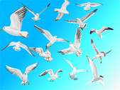 Seagulls in blue sky free