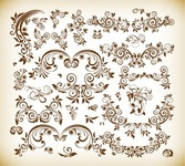 Vector Illustration Set of Decorative Floral Elements