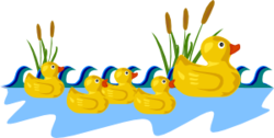 Rubber Duck Family Swimming