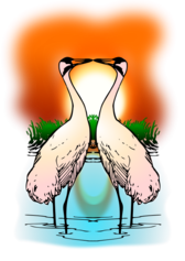 Two Love Whooping Crane
