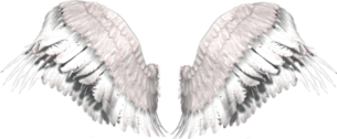 Wings PSD
