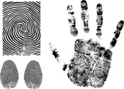 Fingerprint Vector 3