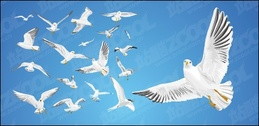 Various movements of seagulls