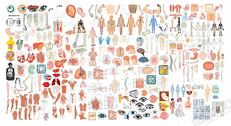 The Structure Of Human Organ Parts Of