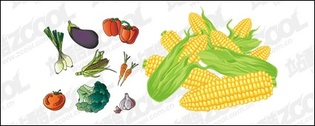 Vector material common fruits and vegetables