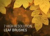 7 High Resolution Leaf Brushes - conceptart.io
