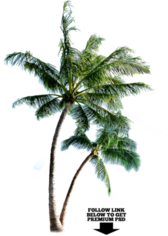 """Palm Tree *Requested"""" (HQ) PSD"""
