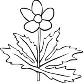 Gg Anemone Canadensis Outline