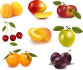Eight Kinds Of Fruits