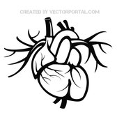 HEART VECTOR ILLUSTRATION.eps