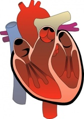 Heart Medical Diagram