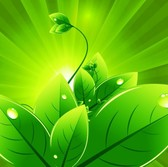 Eco Green Sunburst Leaves Abstract Background