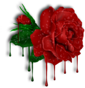 Red Roses and Drops With Transparent Background and Shadow PSD