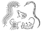 Gecko Centipedes Scorpions And Snakes Toad
