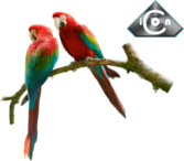Red & Green Macaw PSD