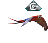 Red & Green Macaw 02 PSD
