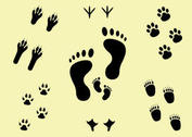 Next Steps Footprint Vector Set